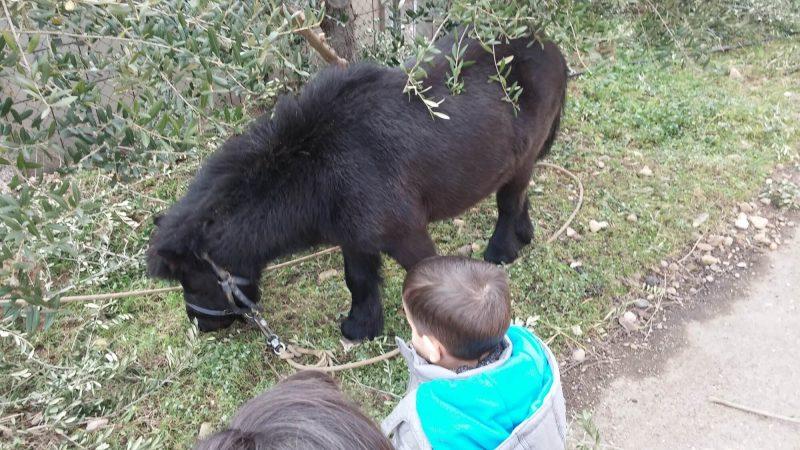 Miércoles Mudo #99: Con el pony